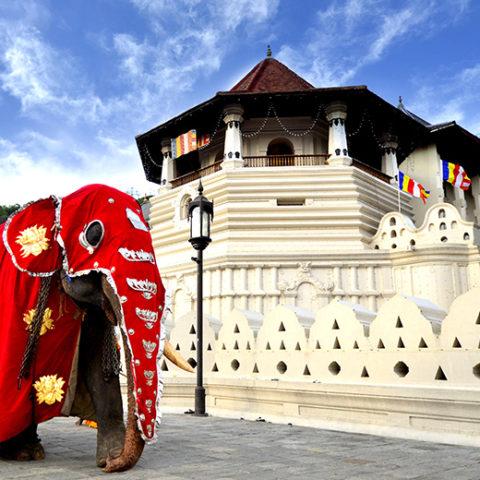 コロンボ発着1泊2日「ダンブッラ」「シーギリヤ」世界遺産と「キャンディ」スリランカ仏教の聖なる町満喫ツアー